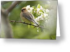 Waxwing In A Dream Greeting Card by Penny Meyers