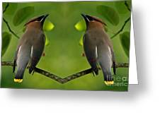 Waxwing Love Greeting Card by Inspired Nature Photography By Shelley Myke