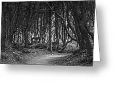 We Follow The Path Greeting Card by Jon Glaser