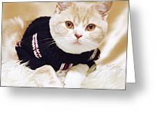 Wearing A Sweater Greeting Card by Aiolos Greek Collections