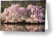 Weeping Cherry Trees Greeting Card by Jack Nevitt