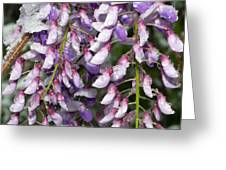 Weeping Wisteria - Spring Snow - Ice - Lavender - Flora Greeting Card by Andee Design