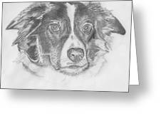 Welsh Border Collie Greeting Card by Catherine Roberts