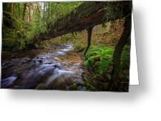 West Humbug Creek Greeting Card by Everet Regal