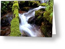 Wet And Green Greeting Card by Steven Milner