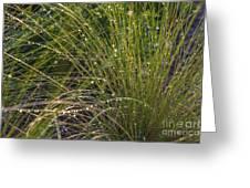Wet Grass Greeting Card by Juan  Silva