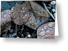 Wet Leaves Greeting Card by Artist and Photographer Laura Wrede