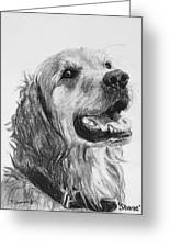 Wet Smiling Golden Retriever Shane Greeting Card by Kate Sumners