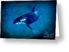 Whale Greeting Card by John Malone