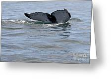 Whale Tail Greeting Card by Bob Hislop