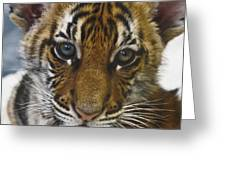What A Face D3875 Greeting Card by Wes and Dotty Weber