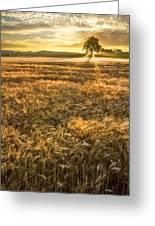 Wheat Fields Of Switzerland Greeting Card by Debra and Dave Vanderlaan