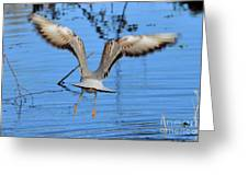 Wheeee Greeting Card by Barry Goble