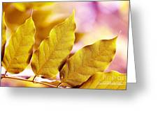 When The Leaves Turn Gold Greeting Card by Artist and Photographer Laura Wrede