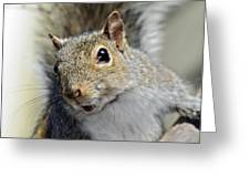 Where Are The Nuts Greeting Card by Susan Leggett