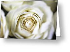 Whie Rose Softly Greeting Card by Garry Gay