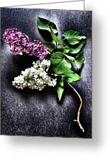 White And Purple Lilacs Greeting Card by Marianna Mills