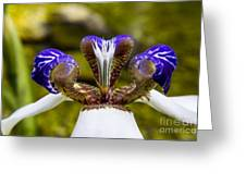 White And Purple Orchid Macro Greeting Card by Darleen Stry