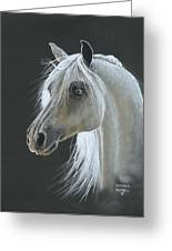 White Arabian Greeting Card by Heather Gessell