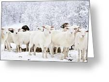 White As Snow Greeting Card by Thomas R Fletcher