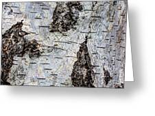 White Birch Abstract  Greeting Card by Heidi Smith
