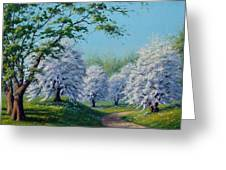 White Blossoms Greeting Card by Rick Hansen
