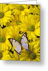White Butterfly On Yellow Mums Greeting Card by Garry Gay