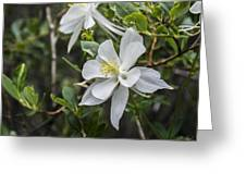 White Columbine Greeting Card by Aaron Spong