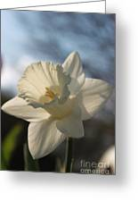 White Daffodil Greeting Card by Jennifer Doll