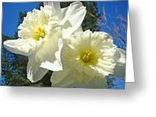 White Daffodils Flowers Art Prints Spring Greeting Card by Baslee Troutman