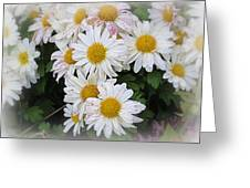 White Daisies Greeting Card by Kay Novy