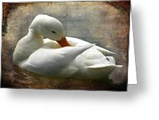 White Duck Greeting Card by Barbara Orenya