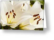 White Flowers Greeting Card by Oscar Karlsson