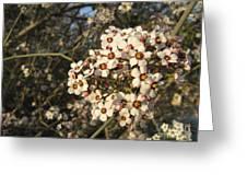 White flowers tree Greeting Card by Ioana Ciurariu