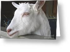 White Goat Greeting Card by Ann Horn