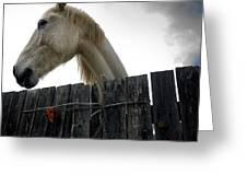 White horse Greeting Card by BERNARD JAUBERT