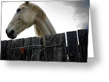 White Horse Greeting Card by Bernard Jaubert