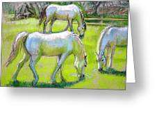 White Horses Grazing Greeting Card by Sue Halstenberg