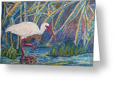 White Ibis In The Mangroves Greeting Card by Judy Via-Wolff