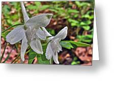 White Larkspur On Rock Spring Trail Near Natchez Trace Parkway-alabama Greeting Card by Ruth Hager