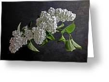 White Lilacs Greeting Card by Hugo Bussen