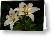 White Lilies Greeting Card by Davorin Mance