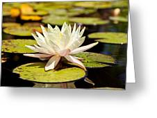 White Lotus Flower In Lily Pond Greeting Card by Susan  Schmitz