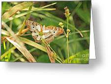 White Peacock Butterfly On Wild Daisy Greeting Card by Terri Mills