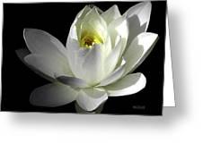 White Petals Aquatic Bloom Greeting Card by Julie Palencia