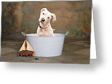 White Pitbull Puppy Portrait Greeting Card by James BO  Insogna