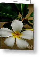 White Plumeria 2 Greeting Card by Cheryl Young