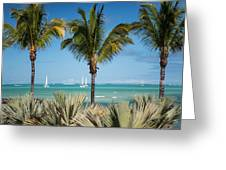 White Sails. Mauritius Greeting Card by Jenny Rainbow