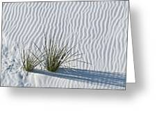 White Sands Grasses Greeting Card by Steve Gadomski