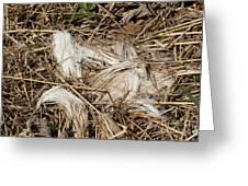 White-tailed Deer Hair Greeting Card by Linda Freshwaters Arndt